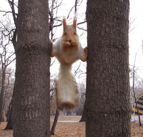 Squirrel-on-two-trees