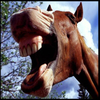 http://lmnop.blogs.com/photos/uncategorized/horse_3.jpg